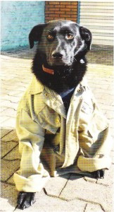 """Tischlerhund in Berufsbekleidung: Ember schaut übrigens nicht gelangweilt, sondern satt, denn für das Foto waren """"Unmengen"""" an Leckerli nötig, damit die Bell-Mamsell nicht samt Jacke das Weite suchte."""